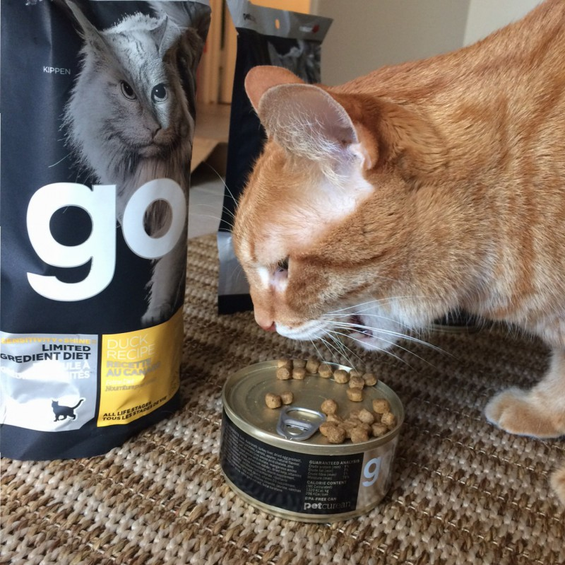 Gluten Free Cat Food Favorites Celiac And The Beast