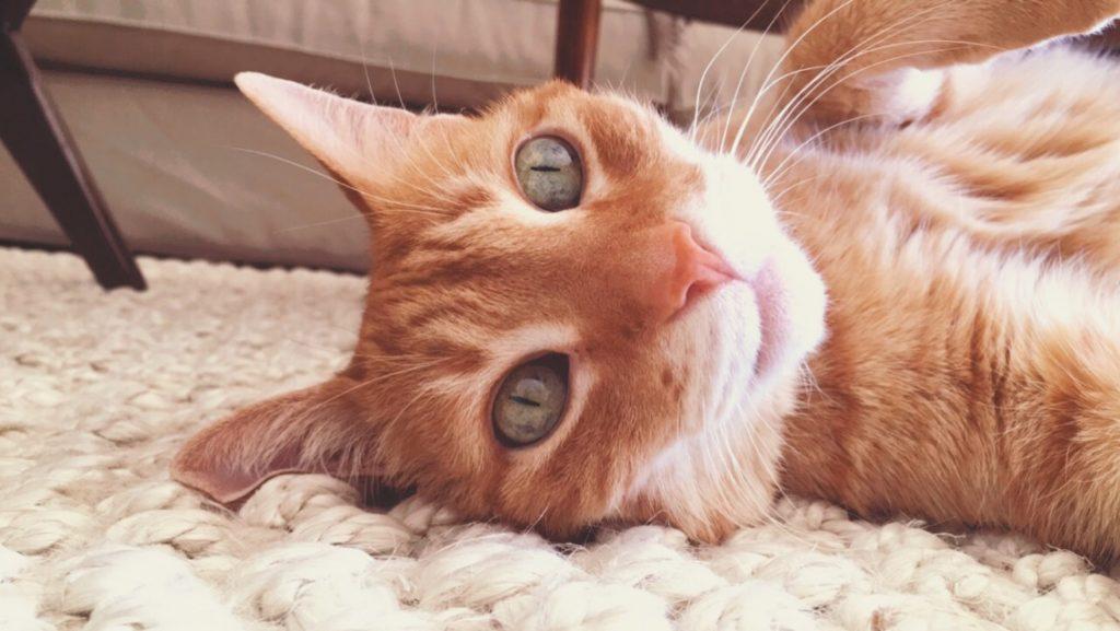 Murphy on the Carpet