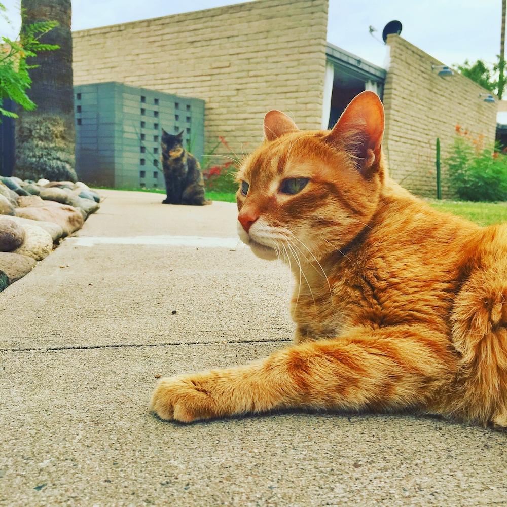 Murphy and Mushu on the Sidewalk