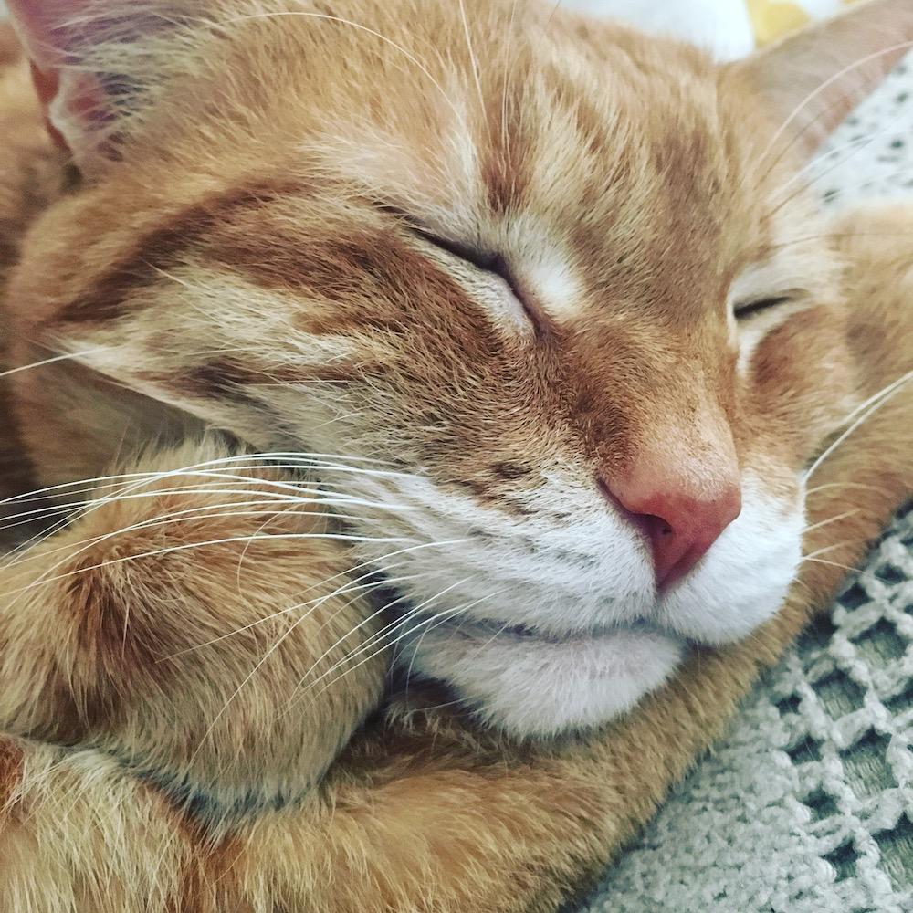 Murphy Sleeping
